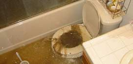 We are trained and certified in the clean up of sewage leaks