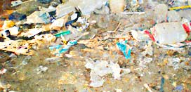 Squatters Clean Up Blue Bay